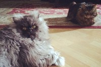 foto: screenshot/facebook/colonel meow