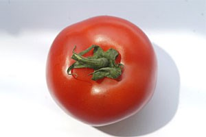 In den Gemsegrten amerikanischer Forscher wachsen bereits Tomaten, die gegen &#xD;&#xA;Kinderlhmung immunisieren. 
