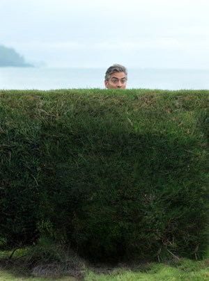 ber die Hecke lugen: George Clooney als gehrnter Ehemann in &quot;The Descendants&quot;. 