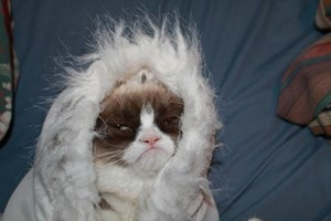 Grumpy Cat.