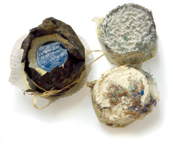 "Verschiedene Piemonteser Ziegenkäse von ""La Bottera"".Je Stück ca. EURO 2 bei Alimentari Gian Carlo, Billrothstr. 41, 1190 Wien."
