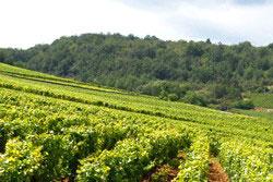 Wein aus   Burgund.