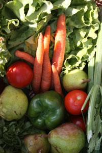 """Zu Beginn wird das Angebot frisches Obst und Gemüse von Hans Leurer aus Wallern und von der wunderbaren """"Alles Apfel""""-Initiative umfassen."""