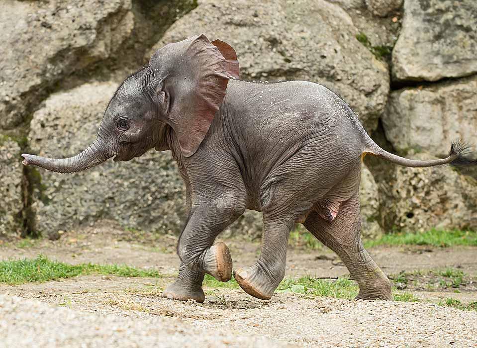 sch nbrunns elefantenbaby hei t iqhwa tierg rten. Black Bedroom Furniture Sets. Home Design Ideas