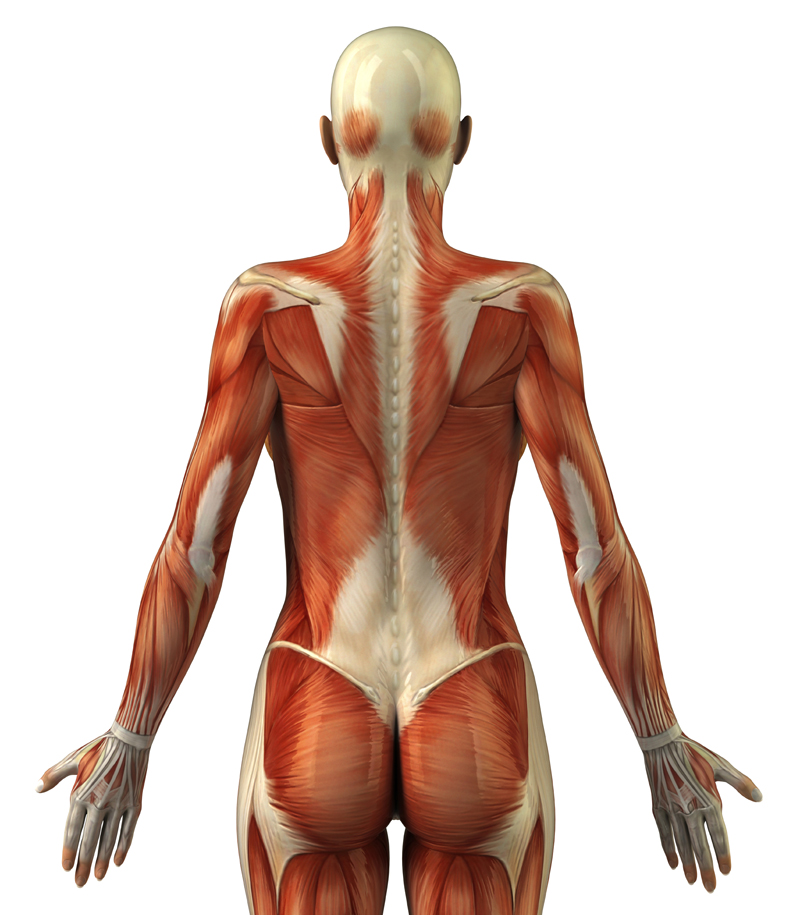 how to build outer back muscles