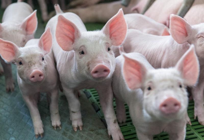 preisschlacht bei schweinen handel schaut ber tellerrand handel wirtschaft. Black Bedroom Furniture Sets. Home Design Ideas