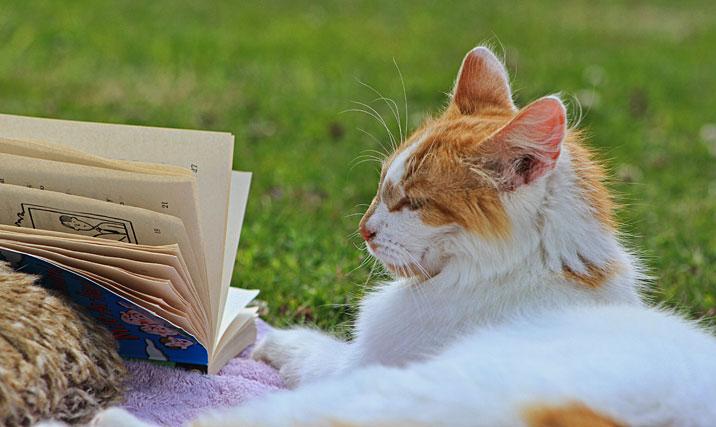 experiment zeigt katzen sind mindestens so intelligent wie hunde seite 1 wochenschau. Black Bedroom Furniture Sets. Home Design Ideas