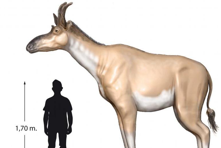 Decennatherium: Eine etwas andere Giraffe