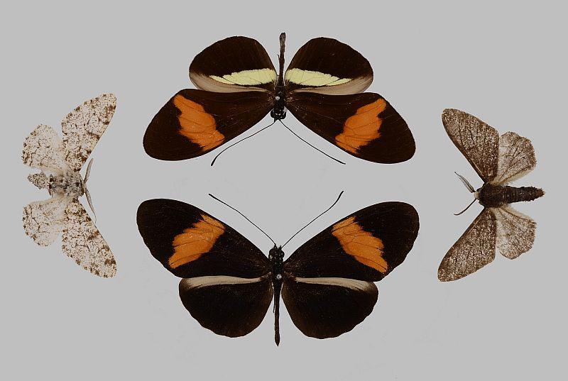 80 Prozent neue Haut: Gentherapie rettet Schmetterlingskind