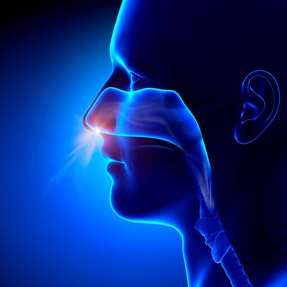 Was der Verlust des Geruchssinns bedeutet
