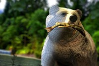 foto: bear simulator