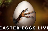 foto: channel 4 easter eggs live screenshot