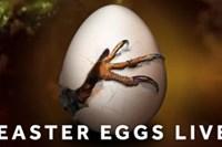 foto: channel 4 easter eggs live screenshot