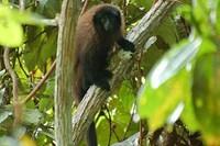 foto: proyecto mono tocón
