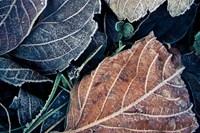 foto: phyllis rachler