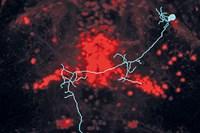 foto: mpi f. neurobiologie/ semmelhack