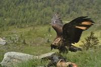 foto: nationalpark hohe tauern/knollseisen