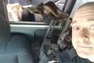foto: belfast (maine) police department
