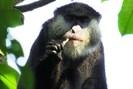 foto: felix angwella / gombe hybrid monkey project