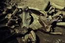 foto: klaus cornelius