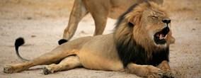 foto: handout zimbabwe parks and wildlife management authority
