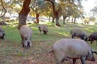 foto: sierradearacena.net