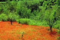 foto: cyprus tourism organisation