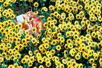foto: miniatur-wunderland
