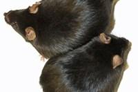 foto: mpi für immunbiologie und epigenetik/ k. gossens