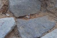 foto: sabine hornung, arno braun