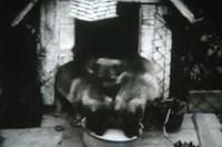 still: österreichisches filmmuseum