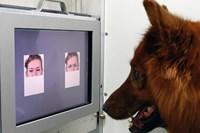 foto: clever dog lab / vetmeduni vienna