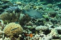 foto: australian institute of marine science