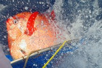 foto: noaa fisheries