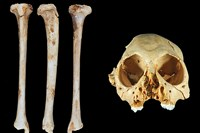 foto: journal of human evolution
