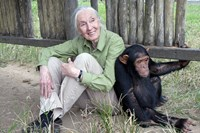 foto: the jane goodall institute
