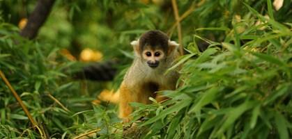 foto: zoo salzburg
