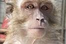 foto: vanessa schmitt / deutsches primatenzentrum gmbh