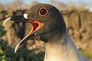 foto: max-planck-institut für ornithologie