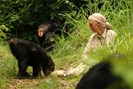 foto: www.janegoodall.at
