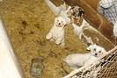 foto: © vier pfoten  | e.v. pogotowie dla zwierzat