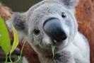 foto: wild life sydney zoo