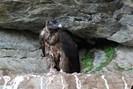 foto: nationalpark hohe tauern, michael knollseisen