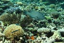 foto: australian institute of marine science