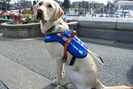 foto: b.c. and alberta guide dogs