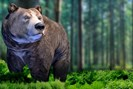 foto: bear simulator
