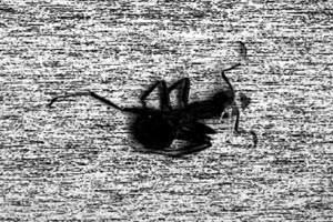Ground Control (2008):Nicht nur formale Reflexionen über die lichtelektrische Cäsiumoxyd-Schicht auf derInnenseite einer Braunschen Röhre.