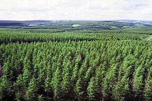 Grüne Lungen im Reich der Mitte: Chinesische Böden und Wälder nehmen ein Drittel des in China ausgestoßenen CO2 auf.