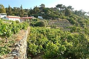 Die Familie Karimalis in Pigi, nahe Evdilos, fährt nicht nur das ersteElektroauto der Insel, sondern auch das Weingut (Bild) wird biodynamischbewirtschaftet; dort werden Weinseminare veranstaltet und drei alte Steinhäuser in erstklassiger Lage vermietet.