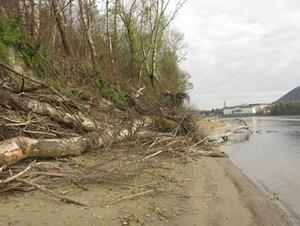 Durch das Wegnehmen der festen Uferverankerung im Jahr 2006 kann sich die Donau wieder ausbreiten, wodurch auch ein neuer Lebensraum entstand.